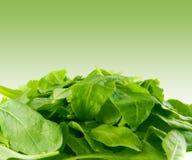 Verdes perfeitos do espinafre do bebê Foto de Stock