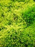 Verdes vibrantes Imagem de Stock