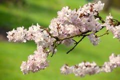 Verdes y colores de rosa suaves Imagen de archivo libre de regalías