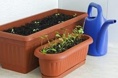 Verdi che fanno il giardinaggio sul balcone Fotografia Stock