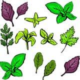 Verdi colorati dell'insalata isolati su fondo bianco illustrazione vettoriale