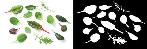 Verdi del bambino di Microgreens, percorsi, vista superiore Fotografia Stock