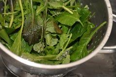 Verdi dell'insalata Immagine Stock Libera da Diritti