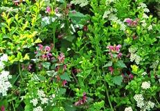 Verdi della primavera Immagini Stock