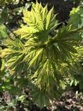 Verdi della primavera Fotografia Stock Libera da Diritti