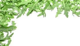 Verdi della rucola su un fondo bianco Fotografia Stock