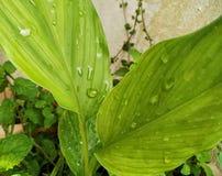 verdi fotografia stock