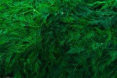 Verdi freschi, aneto, vista superiore del primo piano dei condimenti sul contatore del mercato di verdure Immagini Stock Libere da Diritti