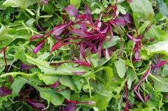 Verdi freschi del giacimento dell'insalata mista Immagine Stock Libera da Diritti