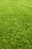 Verdissez la pelouse photographie stock