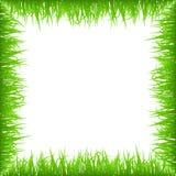 Verdissez le cadre tôt d'herbe de ressort d'isolement sur le fond blanc Frontière réaliste de nature d'eco illustration libre de droits