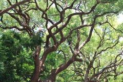 Verdissez les arbres adnés Image libre de droits
