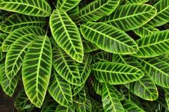 Verdissez les lames tropicales, fond Photos stock