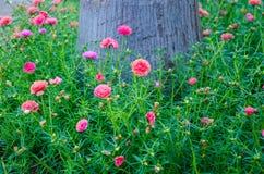Verdolaga. And tree of background Stock Photo