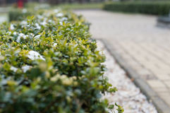 Verdor, arbustos y flores congelados en el jardín en primavera Imagen de archivo