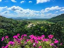 Verdor de la montaña con las flores rosadas Fotografía de archivo libre de regalías