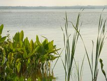 Verdor del lago Imágenes de archivo libres de regalías