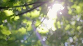 Verdor fresco, luz del sol a través de las hojas metrajes