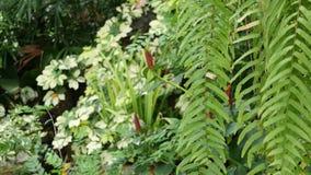 Verdor tropical exótico jugoso brillante en selva Fondo orgánico natural del foco selectivo, follaje inusual de la planta calma almacen de metraje de vídeo