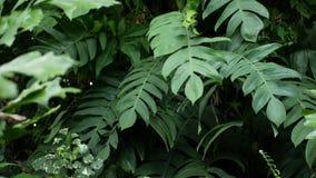 Verdor tropical exótico jugoso brillante en selva Fondo orgánico natural del foco selectivo, follaje inusual de la planta calma metrajes