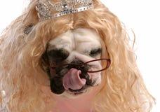 Verdorbener Hund Stockbild
