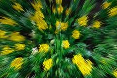 Verdrängen Sie von der gelben Blume Stockfoto