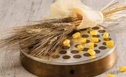 Verdrängen und Weizenbronze Lizenzfreies Stockfoto