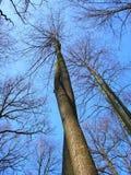 Verdraaide Bomen Stock Afbeelding