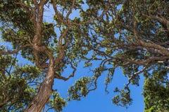 Verdraaide boomtakken Royalty-vrije Stock Afbeeldingen
