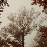 Verdraaide de herfstboom Stock Foto's