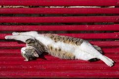 Verdraaide kat, het uitrekken zich en het slapen stock foto's