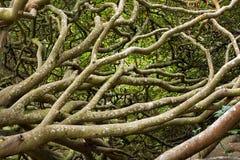 Verdrehen der Zweige Stockfotos