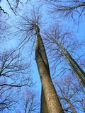 Verdrehte Bäume Stockbild