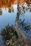 Verdrehte Birke über dem See stockfoto