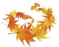 Verdrehte Blätter Stockbild