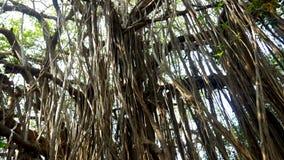 Verdrehte Lianen auf nass exotischen Anlagen und Bäume in der Wildnis des dichten Regenwaldes stock footage