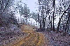 Verdrehte Straße im Wald am nebeligen Tag Stockbild
