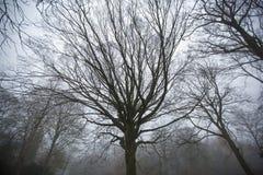 Verdrehte, unheimliche Bäume im Wald Stockfotografie