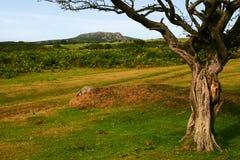 Verdrehter Baum Stockbild