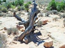 Verdrehter Baum Stockfoto