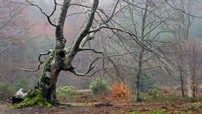 Verdrehter Baum im Wald Stockbild