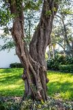 Verdrehtes Baum-Kabel stockfotos