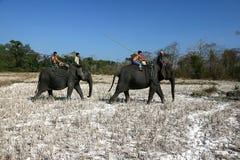 Verdubbeling van vangst wilde olifant Stock Foto
