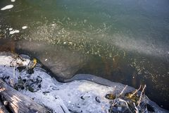 Verdun eerste ijs op de rivier royalty-vrije stock foto's