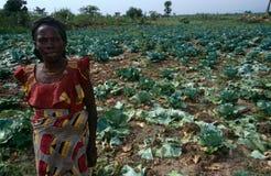 Verdura che coltiva nell'Uganda. Fotografie Stock Libere da Diritti