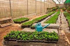 Verdura che pianta nell'azienda agricola moderna Fotografia Stock