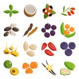 Verdura de la comida vegetariana y platos sanos del restaurante de las frutas Vector de la historieta Imágenes de archivo libres de regalías