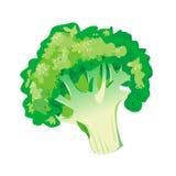Verdura del bróculi libre illustration
