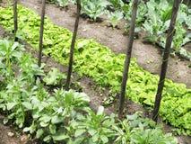 verdura del giardino Fotografie Stock Libere da Diritti