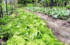 verdura del giardino Immagini Stock Libere da Diritti